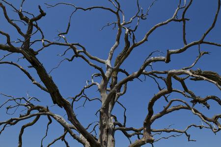 Kahler Baum Zweige gegen blauen Himmel Standard-Bild