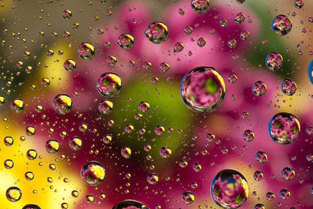 raindrops: Raindrops and Flowers Abstract Stock Photo