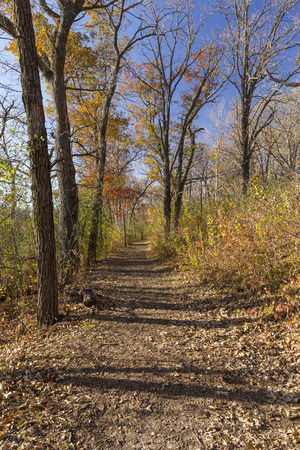 minnesota woods: A hiking trail in the woods during autumn.