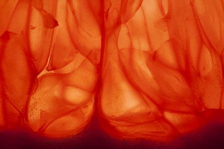 A closeup of a slice of grapefruit. Stock Photo