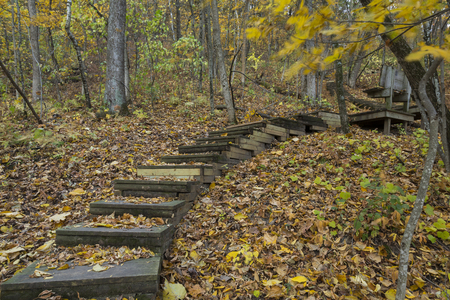 minnesota woods: A step trail in the woods during autumn.