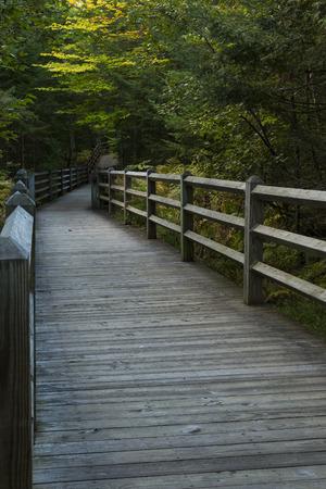 boardwalk trail: Boardwalk Trail Stock Photo