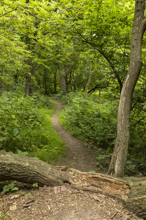 Summer Hiking Trail - A hiking trail in the woods. Stock Photo