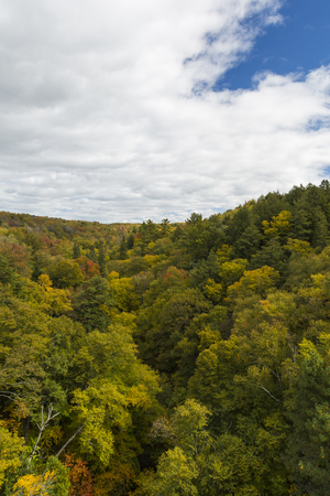 Fall Color Hilly Forest