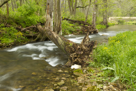 River In The Woods In Spring 免版税图像