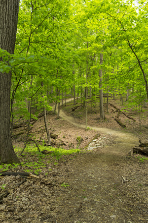 Hiking Trail In The Woods In Spring Stock Photo
