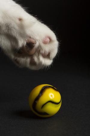 Cat Paw Swatting At A Marble 版權商用圖片