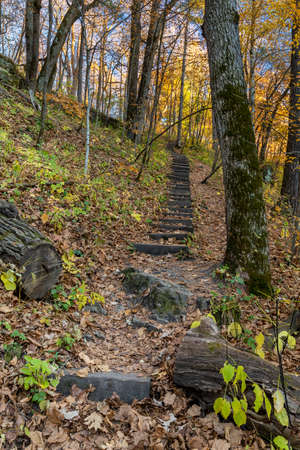 A hiking step trail in the woods during autumn.