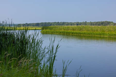 Mississippi River by tall grasses in the summer. Stock Photo