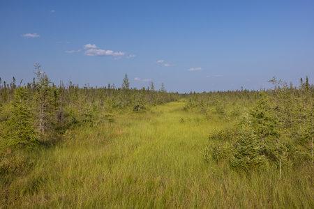 A Bog Landscape