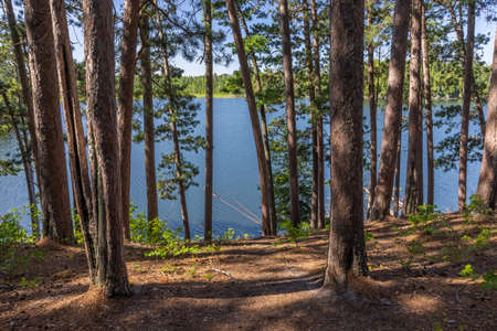 A lake seen through a pine tree forest.
