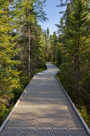 Boardwalk Hiking Trail In A Bog