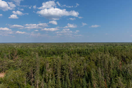 Aerial Forest View In The Summer Stock Photo
