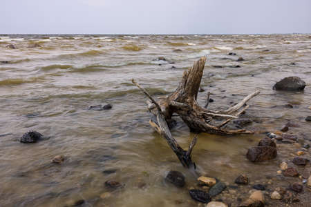 Lake Of The Woods - A very large lake with a rocky shore and interesting driftwood.