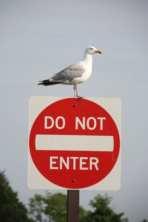 Seagull on a road sign (Larus argentatus)