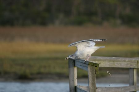 crap: Seagull taking a crap during takeoff of a bridge