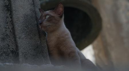 belfry: Stray Cat On Belfry