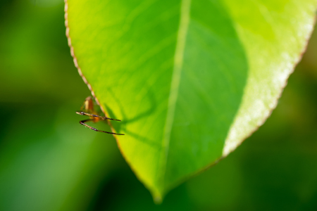 A spider on a green leaf - symbolizes arachnophobia.