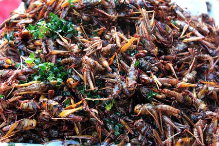Fried bombay locusts with herb placed on the stall for sale at a market in Bangkok, Thailand