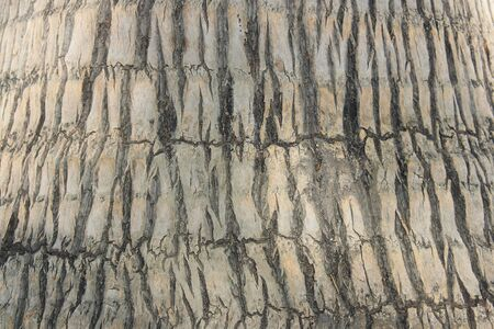 Palm tree trunk pattern as a background