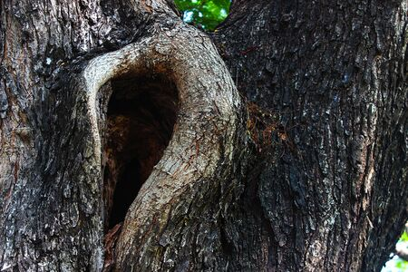 Large hole of a trunk in the park
