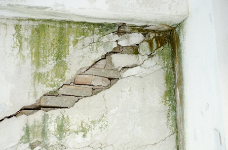 on fungus mold weathered wall
