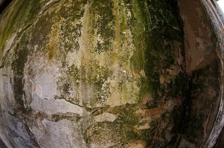 on weathered wall fungus damage mold
