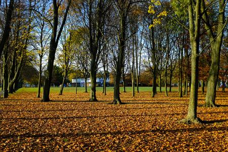 Autumn trees Victoria Park Stock Photo