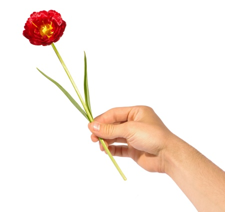 hand giving flower Stock Photo - 11177372