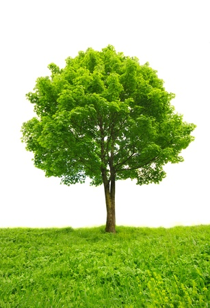 green tree in grass isolated photo