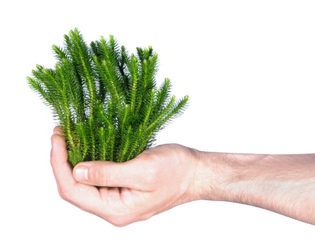 hand holding green plant Stock Photo - 11177382