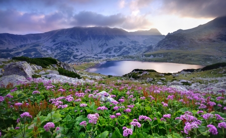 Retezat National Park with lake on mountain and flowers, Romania   photo