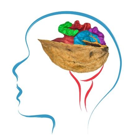brain food: head and brain with walnut shape