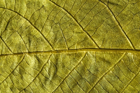 autumn leaf closeup texture photo