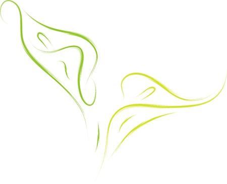 ilustración vectorial de la flor del lirio de cala