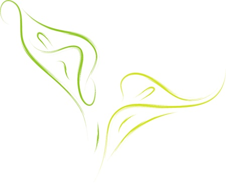 vector illustration of calla lily flower