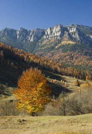 mountain landscape with autumn tree, Romania photo