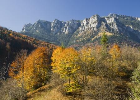 Mountain landscape with autumn trees, Romania photo