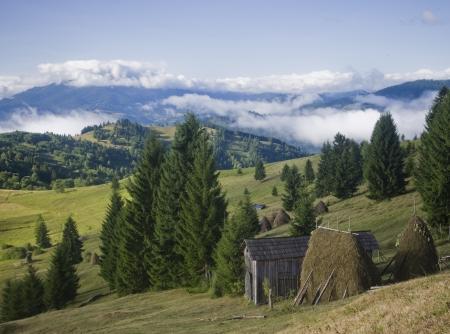 summer landscape on mountain  photo