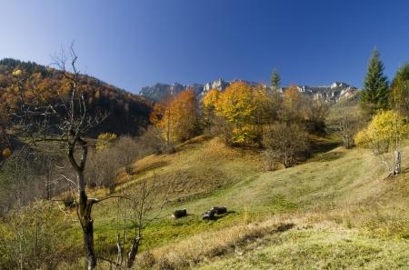 Mountain landscape with autumn trees photo