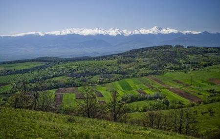 fresh landscape  photo