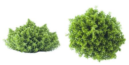 Planta verde Foto de archivo - 31256305