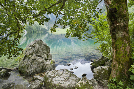 Beautiful lake and tree in Alps photo