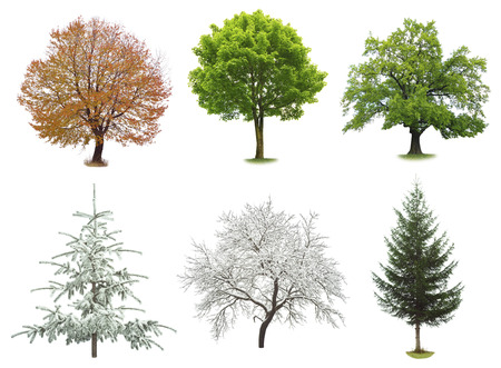 trees seasonal: set of trees isolated on white background Stock Photo