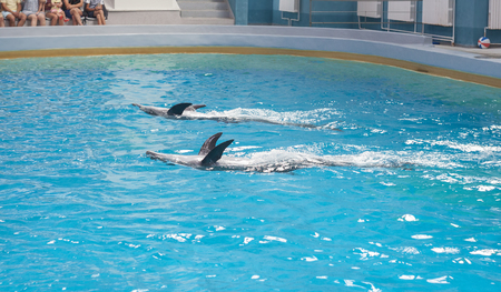dolphin animals at the dolphinarium arena Stock Photo