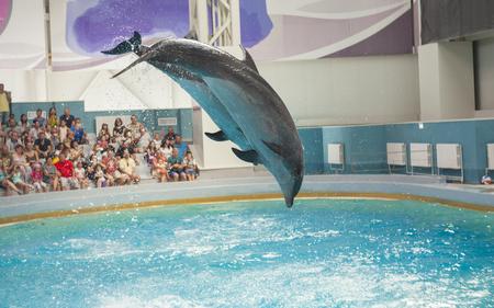 dolphin animals at the dolphinarium arena Stock Photo