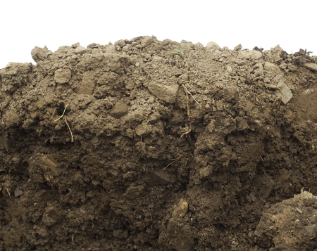 section in the soil or dirt isolated on white