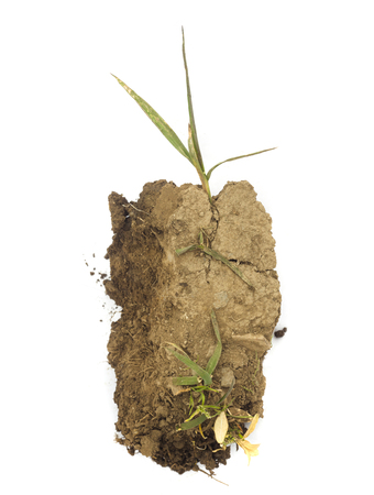 piece of land or dirt with green plant isolated