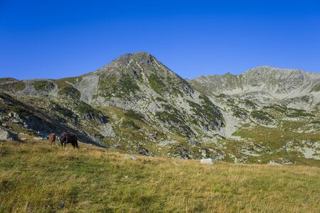 Retezat mountain and wild horses in Romania