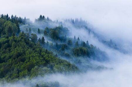 fog and mist in the forest. aerial view of fresh summer morning